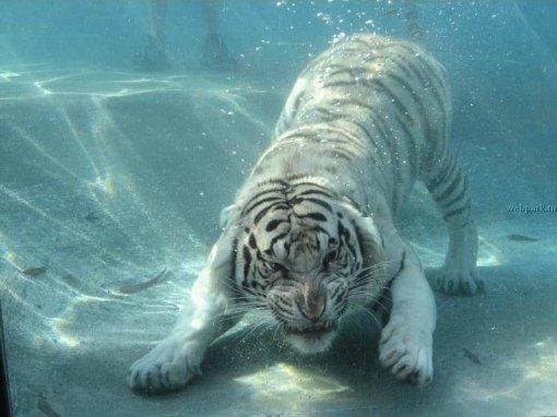 under_water_4